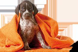 Pets Care & wellness