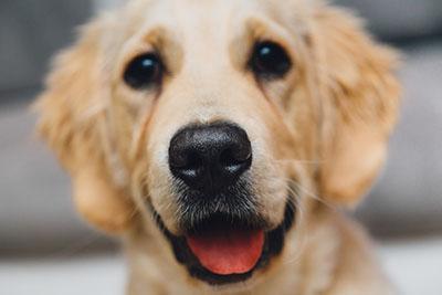 night-animal-dog-pet-large_BEW
