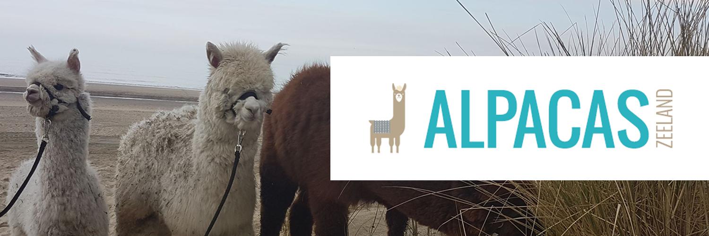 Alpacas Zeeland in omgeving Aagtekerke,